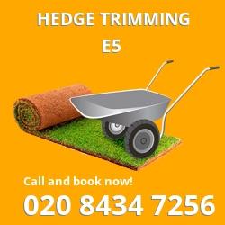 E5 garden trees services in Upper Clapton