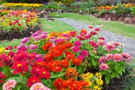 Designing a Flower Garden - Points to Focus On