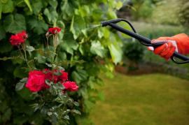 When Is The Best Time For Garden Spraying In Dulwich?
