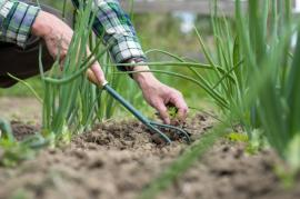 Tips And Tricks To Maintain Your Vegetable Garden In Bromley