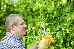 St Albans gardening and maintenance services AL3