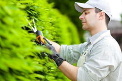 Marble Arch gardening and maintenance services W2