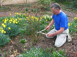 gardening services in Watford
