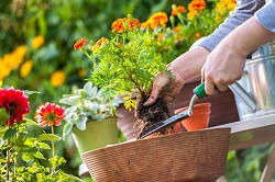 gardening services in Canning Town