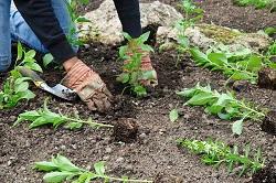 HA5 gardening Pinner