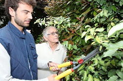 hedge trimming services De Beauvoir Town
