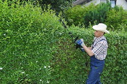 hedge trimming services Lea Bridge