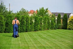 N1 hedge cutting services