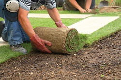 stump removal in City